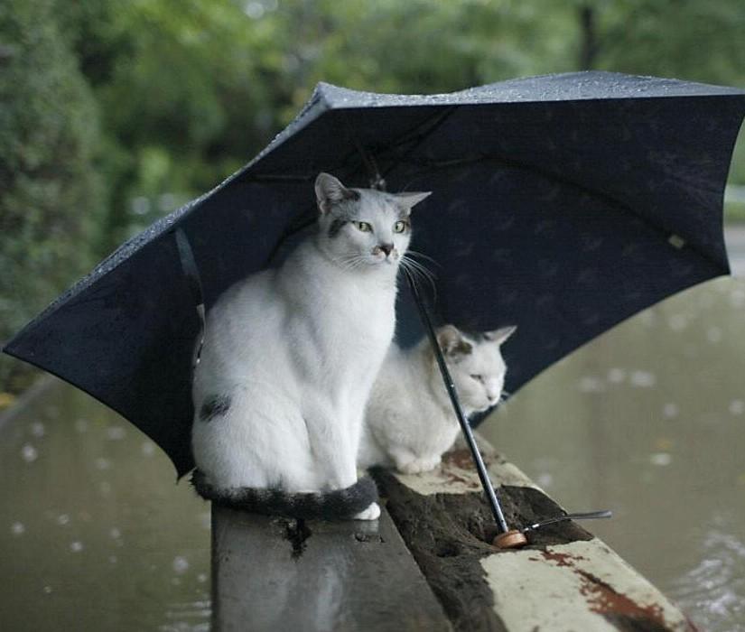 photohumourchat18 dans Les Chats (55)