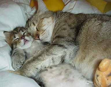Des amours de petits chats dans Les Chats (55) photohumourchat23